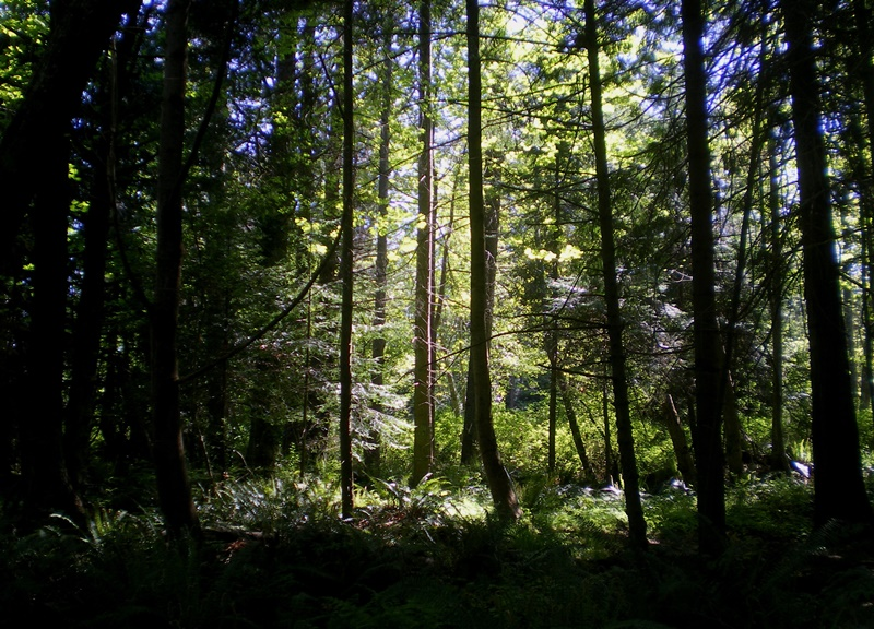 Sunlit-Forest.jpg