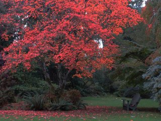 Maple_Milner_Gardens.jpg