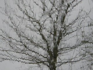 rainy_tree.jpg